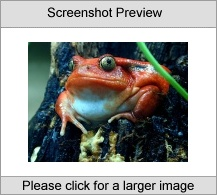 7art Croaking Frogs ScreenSaver Screenshot